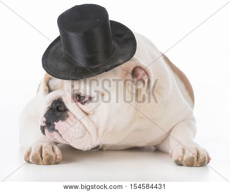 dog wearing a tophat isolated on white