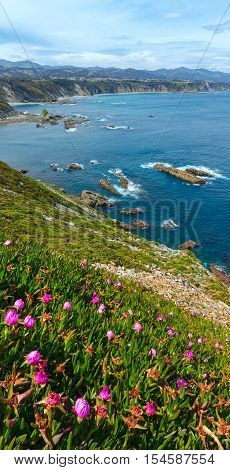 Summer Blossoming Cape Vidio (asturian Coast, Spain).