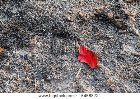 A Red Leaf On The Ashes From Burn Leaves, May Use As A Background.