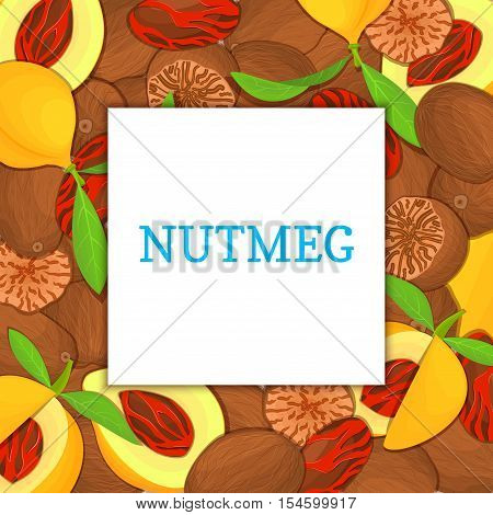 The square colored frame composed of Nutmeg spice fruit. Vector card illustration. Nutmeg nuts frame, fruit in the shell, whole, shelled, leaves appetizing looking for packaging design of healthy food