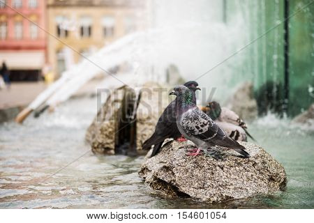Fountain on market square in Wroclaw Poland