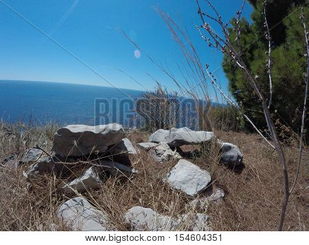 modest vegetation on the background of the sea and the dry grass