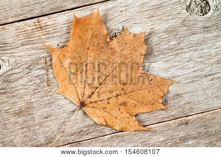 Old rusty leaf on wooden planks background