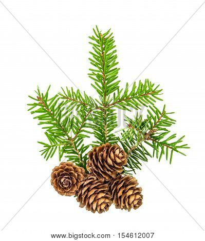 Christmas tree branches isolated on white background. Pine sprig with spruces. Fresh green fir