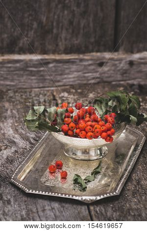 rowanberry on a tray on wooden background