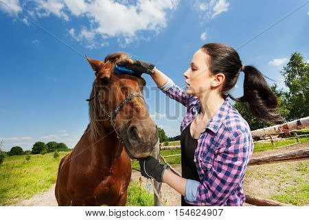 Close-up portrait of young woman grooming bay horse, standing next to enclosure fence in summer