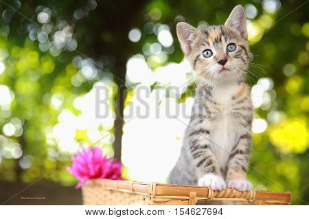 poster of Kitty Cat. Portrait of green-eyed cat in nature.