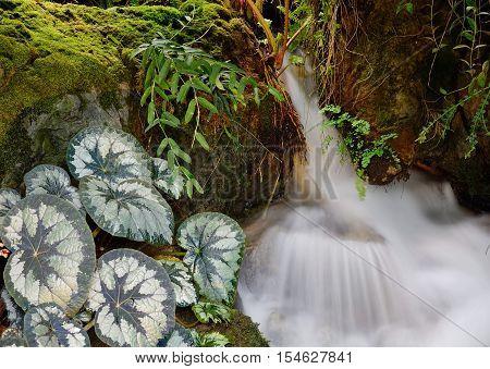 Taro Plants With Stream