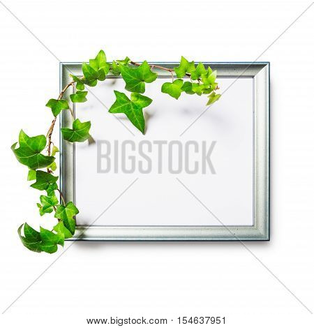 Picture photo frame with green ivy leaves isolated on white background clipping path included. Flat lay. Copy space