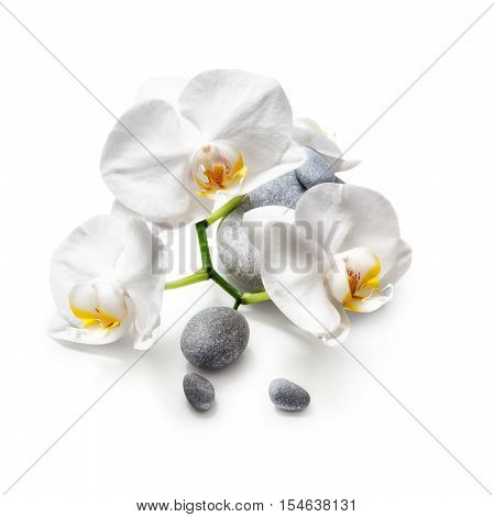 White orchid flowers and spa stones isolated on white background clipping path included