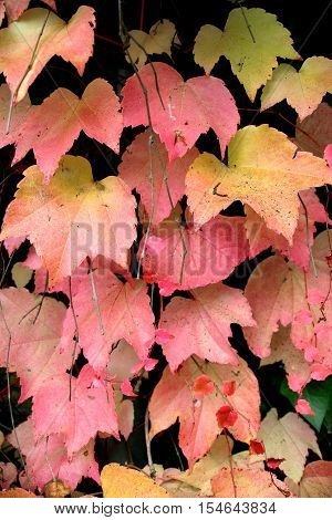 close up of leaves in autumn colors