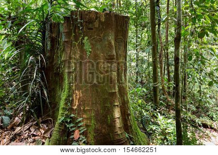 Primitive tribal carving on a stump, Kubah national park, Malaysia, Borneo