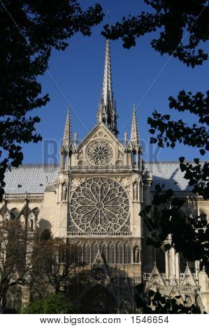 Notre Dame Cathedral Through Trees