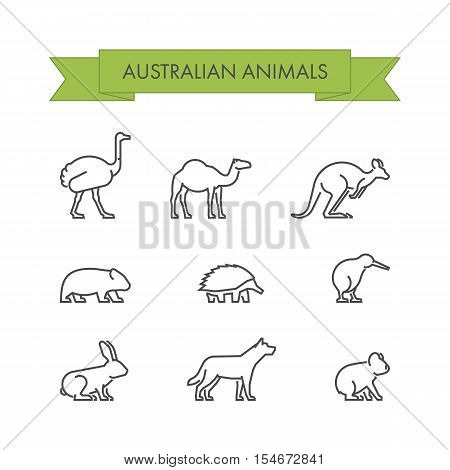 Vector line set of australian animals. Linear icon dingo koala kangaroo echidna and kiwi.