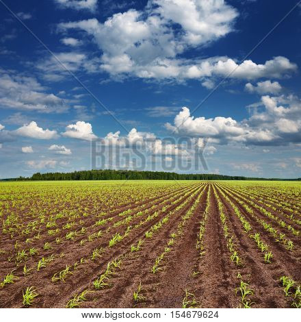 Landscape with field and blue sky
