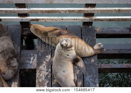 The sea lions in Santa Cruz/Sea lion smile