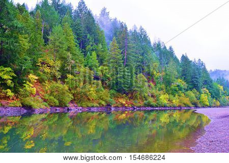 Deciduous trees changing colors during autumn foliage amongst a Pine Forest alongside the Russian River taken at the Russian River, CA