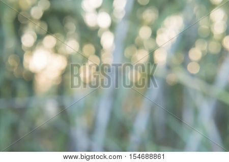 Bokeh picture obtained from a photo to sun and grass