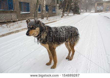Stray dog in a snow storm on a city street. Animals
