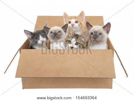 Five assorted kittens in a brown box looking up isolated on a white background. Kitten season kittens for sale and or free to good home