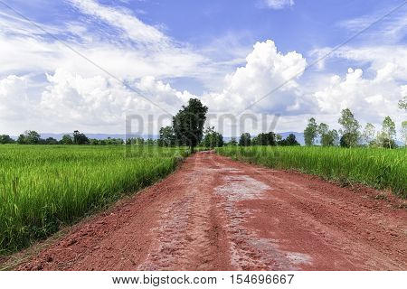 The red road through the middle of the rice fields.