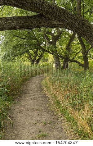 A hiking trail in the woods on a breezy day.