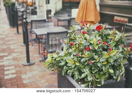 flowers in a street cafe. urban life, street life. empty tables and chairs in a cafe. the concept of the end of the season in the street cafes and open-air terraces in restaurants