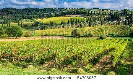 Grenn vineyard near Montalcino in Tuscany, Italy