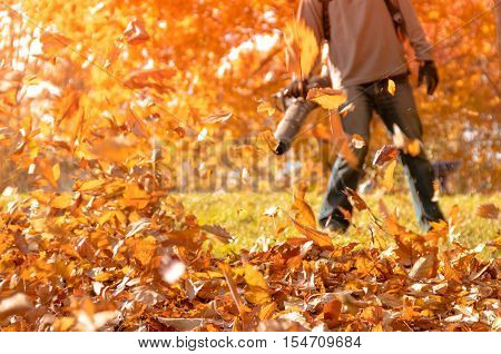 Leaf blower in action blowing crispy fallen leaves from the yard