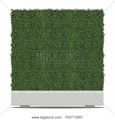 Green tree cube shape in pots isolated on white background.