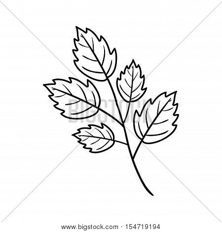 Silhouette toothed leaves with ramifications vector illustration