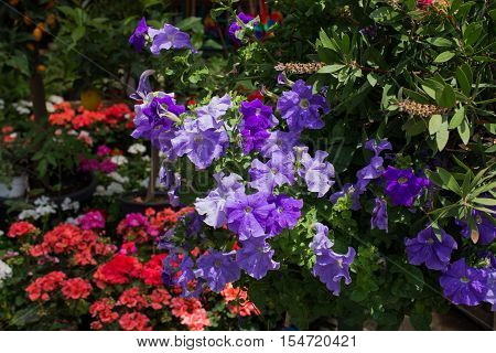 Flower Bed As A Floral Background