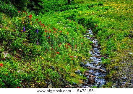 Creek running through the Wild Flowers on Tod Mountain in the Shuswap Highlands of central British Columbia, Canada