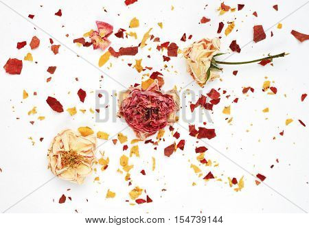 Dried rosebuds and crushed crisp petals background. Rose petal potpourri or decorative card.