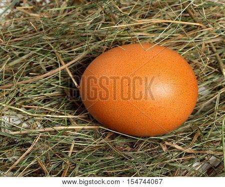 Chicken Egg In Nest