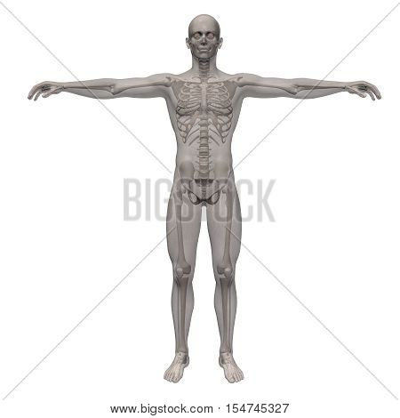 3d render of a human skeleton inside of transparent body envelope isolated on white background