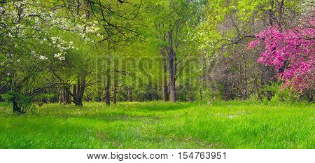 Arboretum in Tiszalok, Hungary. Forest path. Spring flowering. Hungarian countryside. Spring season landscape.