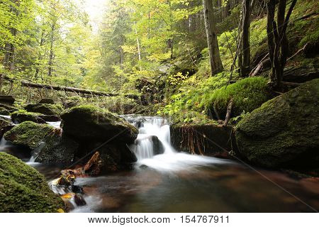Forest stream in early autumn. Poland .