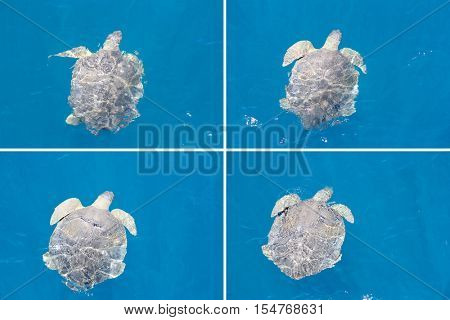 Turtle floating by in slipstream of boat at Hervey Bay Montage
