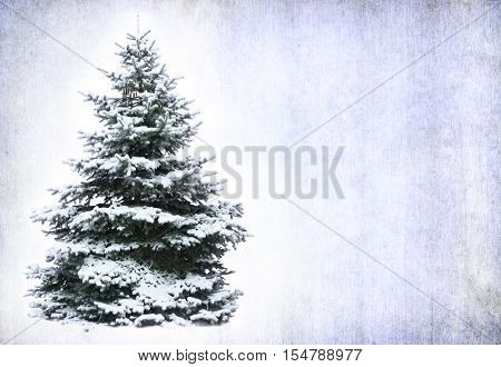 Christmas tree in snow on grunge background