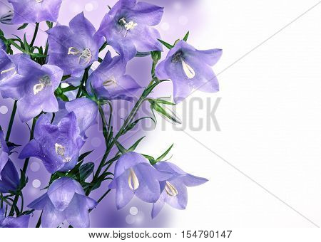 Bouquet of hand bells on a white background . Flower