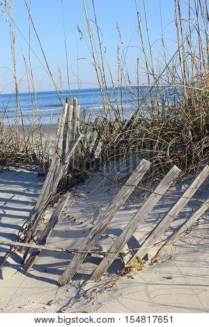 Dunes on the beach at Hilton Head Island