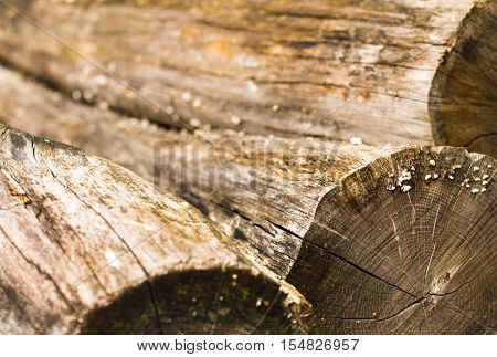 Pile of the old peeled thick logs. Close up.