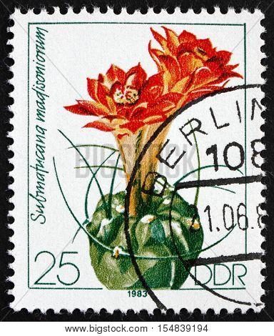 GERMANY - CIRCA 1983: a stamp printed in Germany shows Submatucana Madisoniorum Flowering Cacti circa 1983
