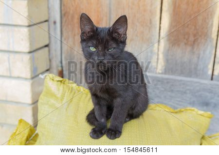 Homeless black kitten sits near a barn. Pets