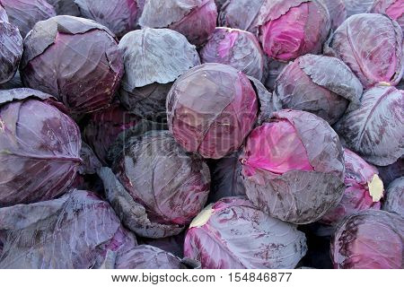 Red cabbage on the market - close up