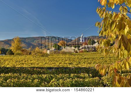 Durnstein church and the vineyards of Wachau in fall. Famous UNESCO cultural landscape known for its wine.