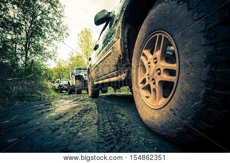 OffRoad Forest Expedition 4x4 Sport Utility Vehicles in Action.