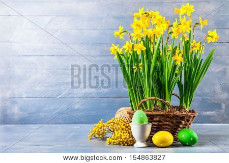 Easter holiday card with eggs yellow spring flower narcissus in wicker basket copyspace on blue wooden board and branch mimosa