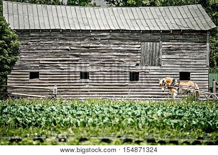 life on farm field in the rural country